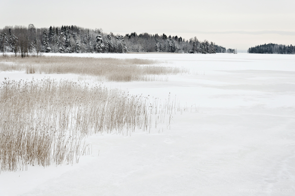by the frozen lake