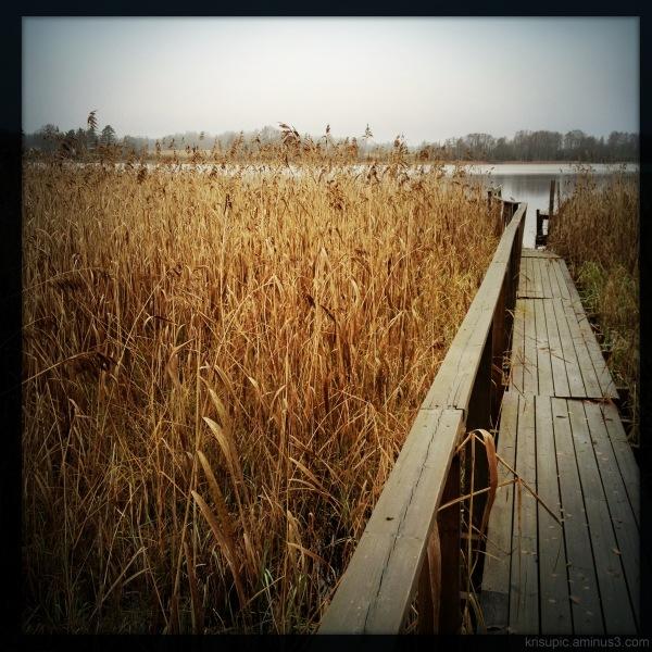 a dock through reed