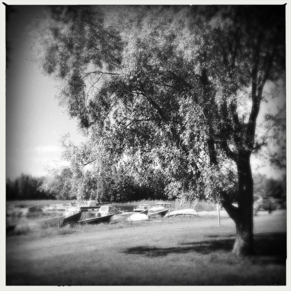 tree and boats 2