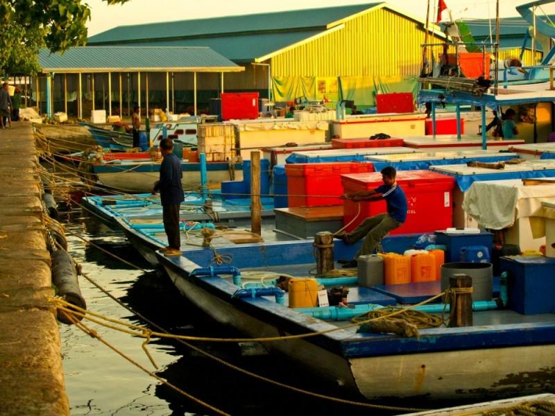 Fisherman in early morning sun ...
