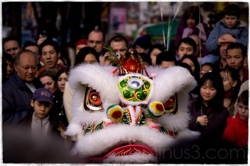 A Lion in the City, Chinese new year 2007.