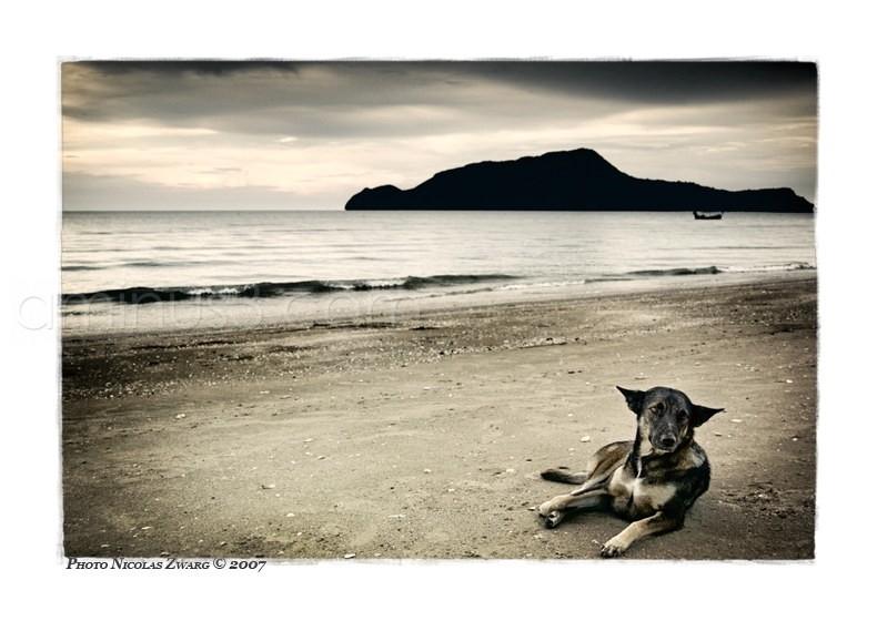 Dog on the beach, Prachuap Khiri Khan, Thailand.