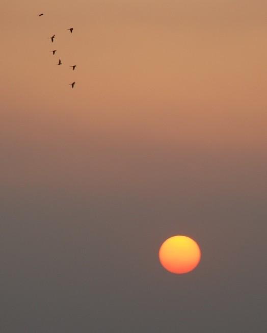 Parakeets at sunset