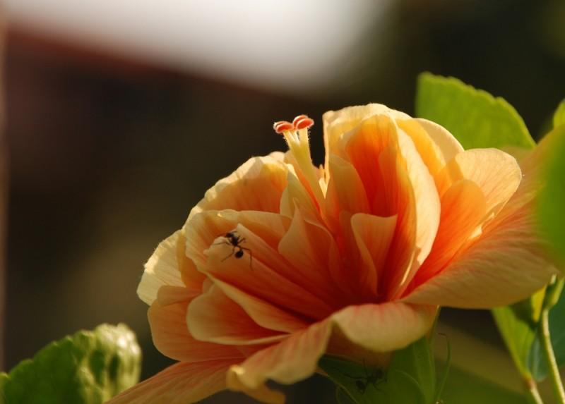 floral antics