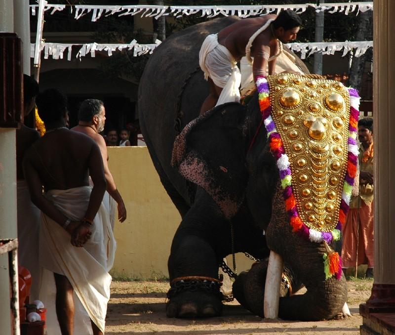 Brahmin Priest Mounts elephant Paluruthy Cochin