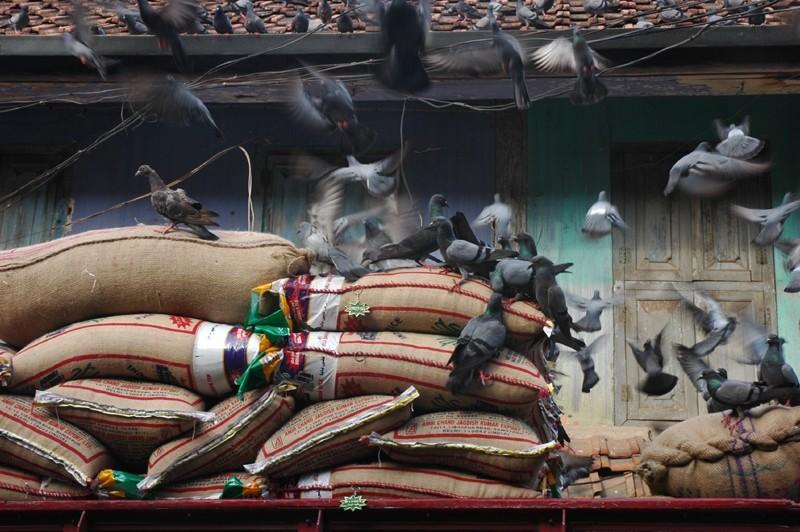 Pigeons Rice Spice Market Fort Kochi Kerela India