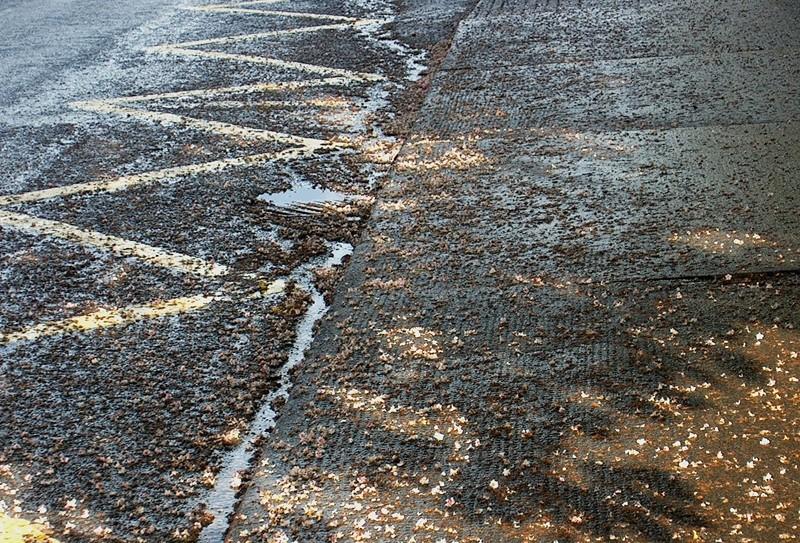 Wet Tarmac Ludlow Shropshire UK