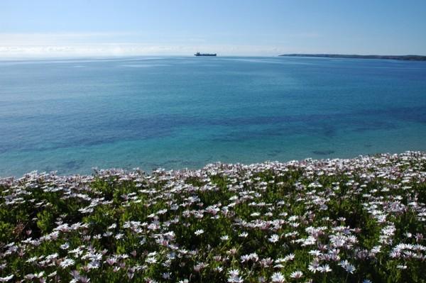 Falmouth Flowers Seascape Cornwall UK