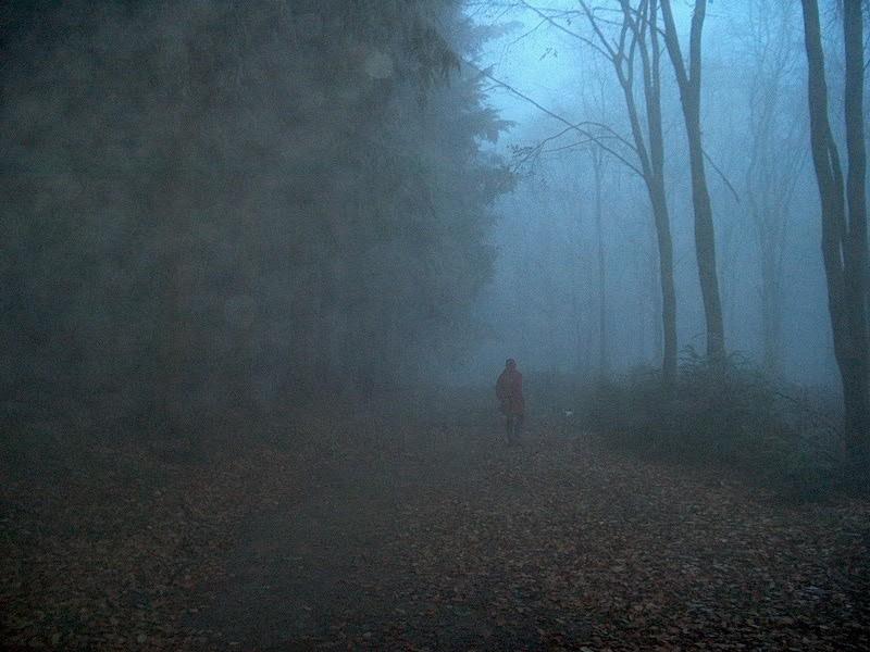 Fog Mortimers Forest Shropshire UK