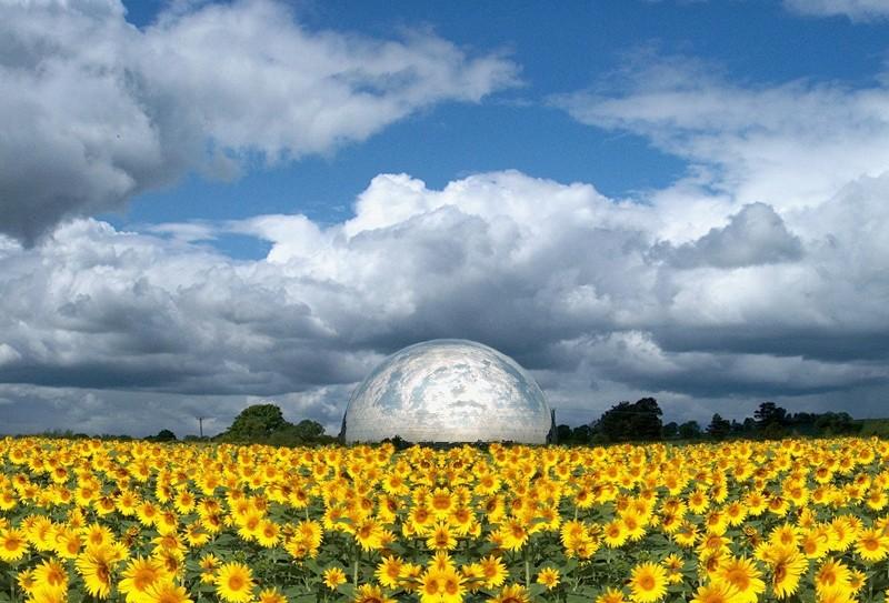 Sunflowers UFO Sky