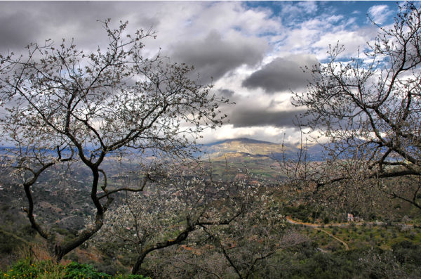 Almond Comares Andalusia Spain