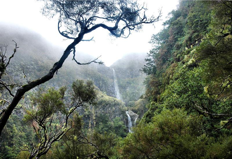 Levada do Risco Madeira