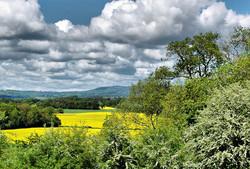 May Blossom Caynham Shropshire UK