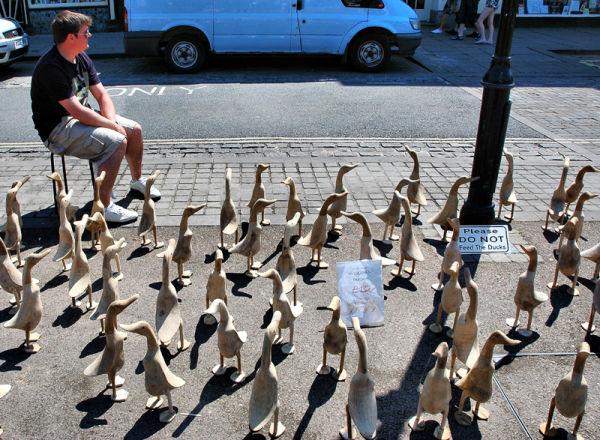 Ducks ludlow Market Shropshire UK