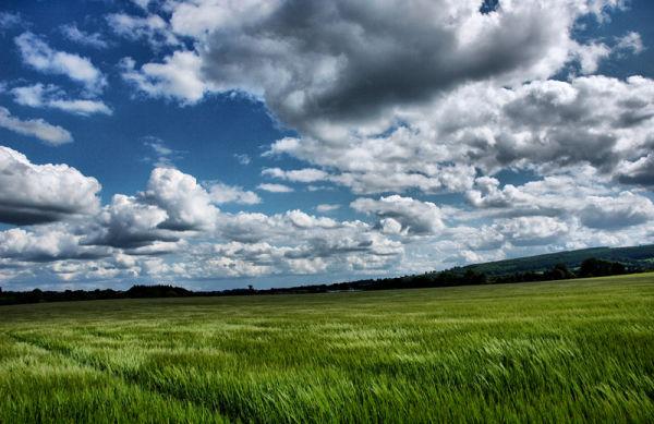 Barley Ludlow Shropshire UK