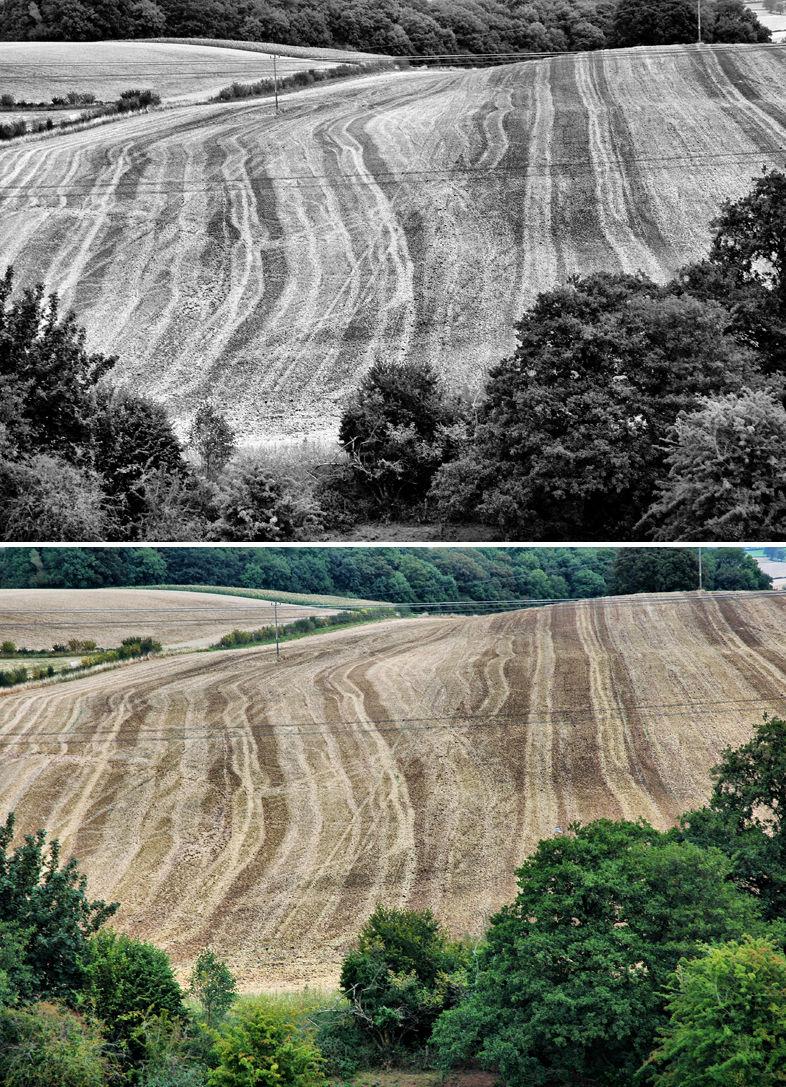 Harvest Ludlow Shropshire UK