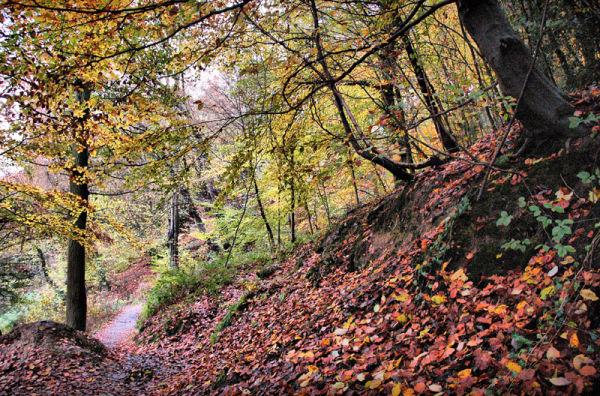 Autumn Leaves Ludlow Shropshire UK