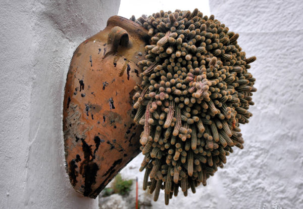 Cactus Comares Andalusia Spain