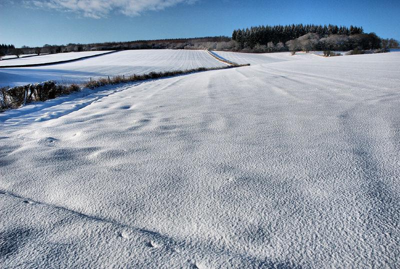 Snow Starve Crow Ludlow Shropshire UK