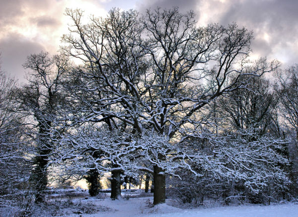 Trees Snow Whitcliff Shropshire UK