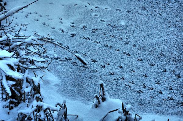 Tracks Snow Ludlow Shropshire UK
