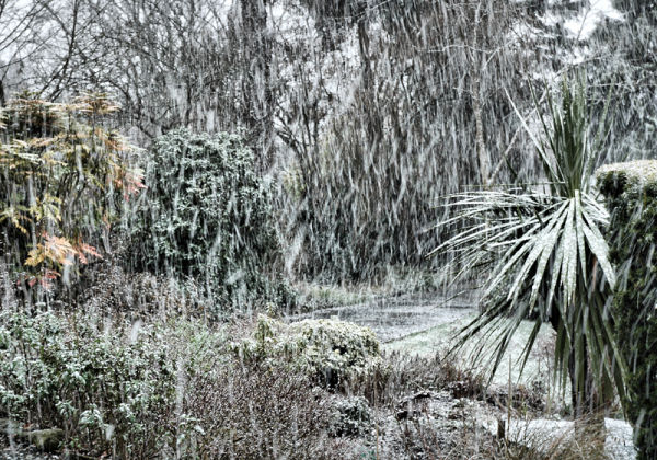 Garden Snow Ludlow Shropshire UK