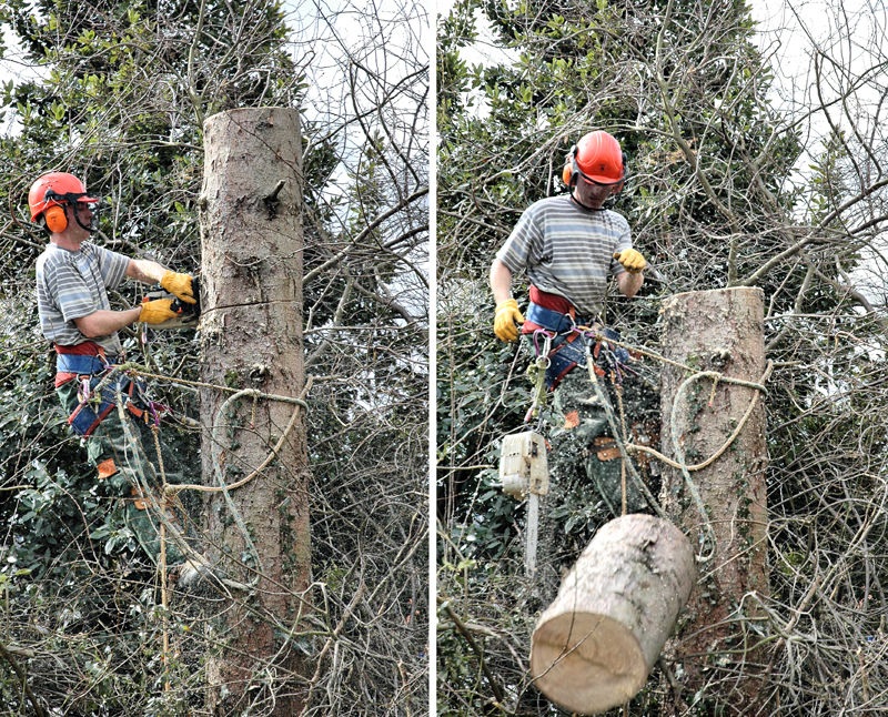 Tree Felling Ludlow Shropshire UK