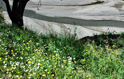 River Flowers Comares Andalusia Spain