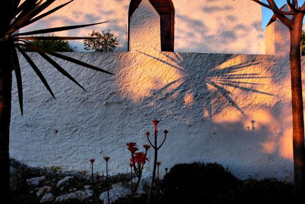 Cordyline sunset Comares Axarquia Spain