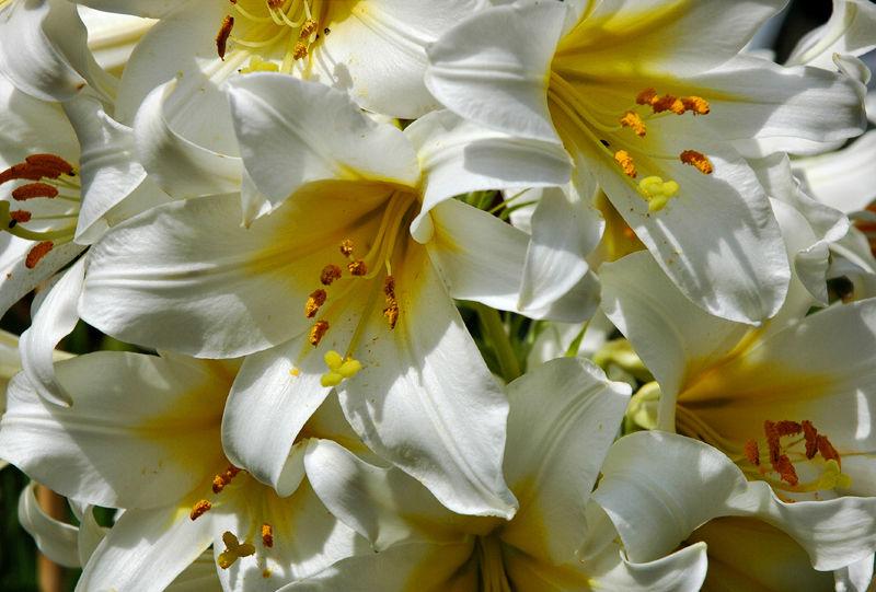 Lily Ludlow Shropshire UK
