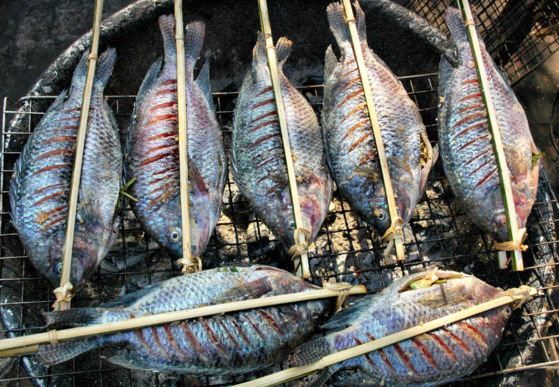 Fish Luang Prabang  Laos