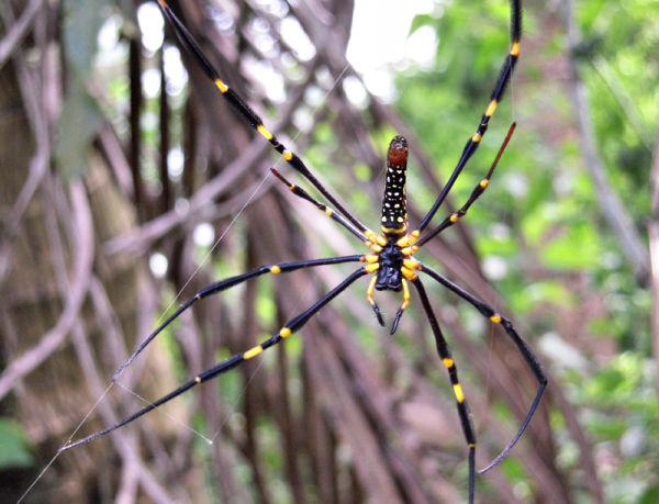 Spider Vang Vieng Laos