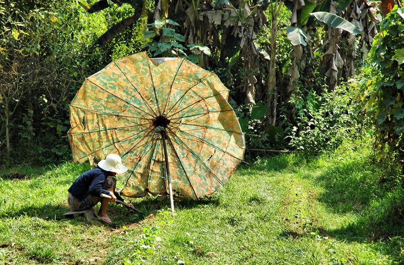 Gardening Vang Vieng Laos