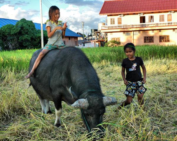 Buffalo Girls Don Det Laos