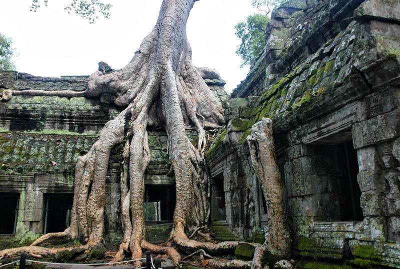 Ta Prohm Angkor Temple Complex Cambodia