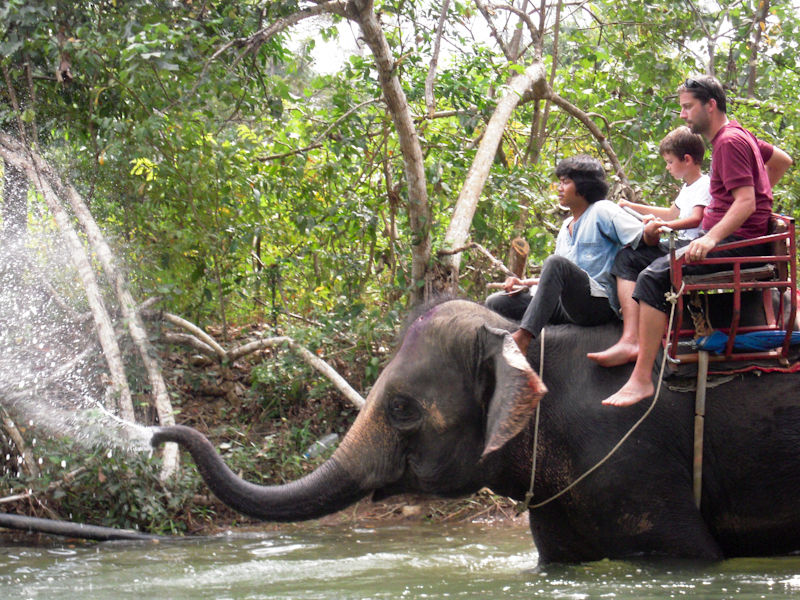 Elephants Ko Chang Thailand
