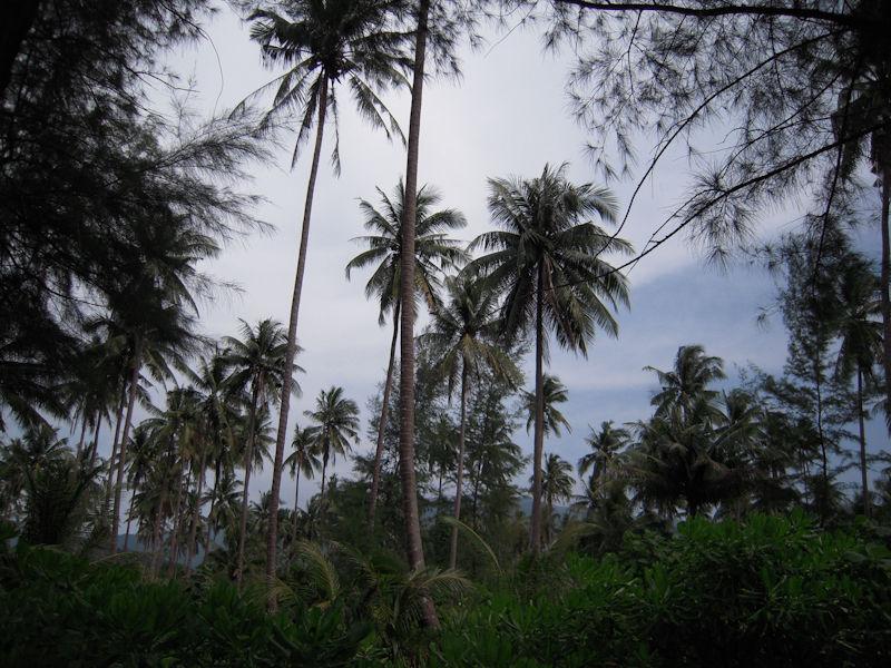Palms Ko Chang Thailand
