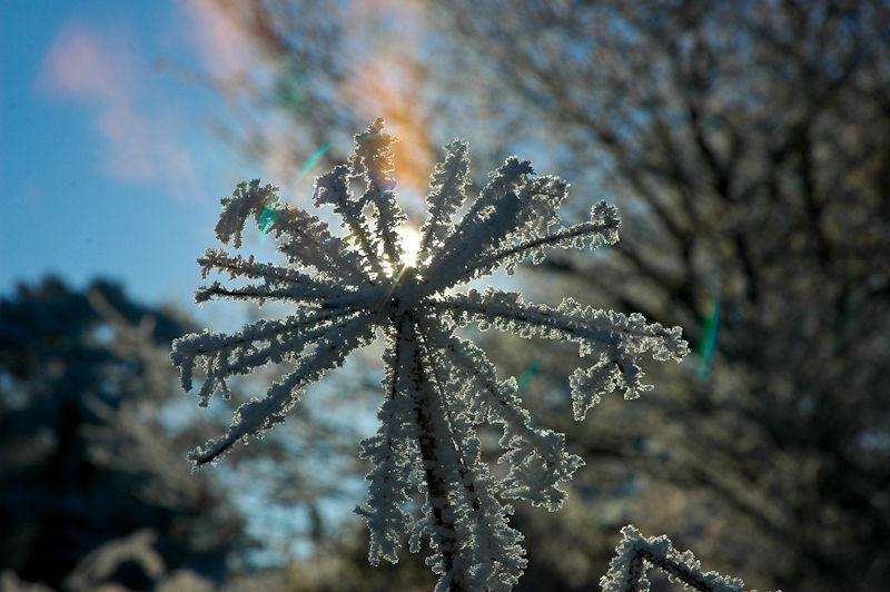 Frozen plant ludlow Shropshire UK