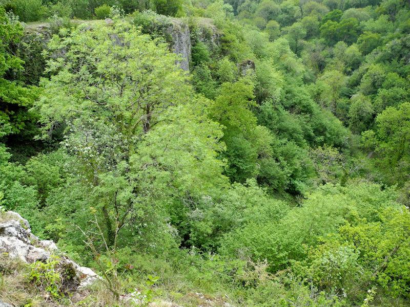 Ebor Gorge Somerset UK