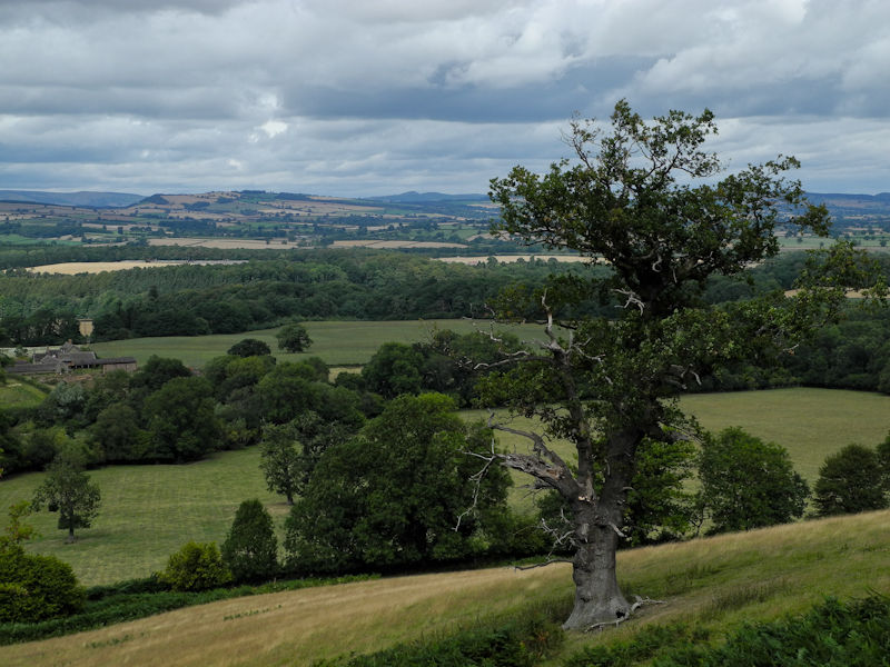 Clouds Oak Ludlow Shropshire UK