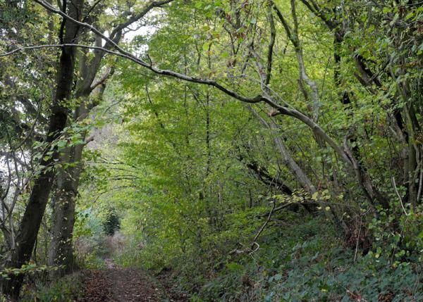 Whitcliff Ludlow Shropshire UK