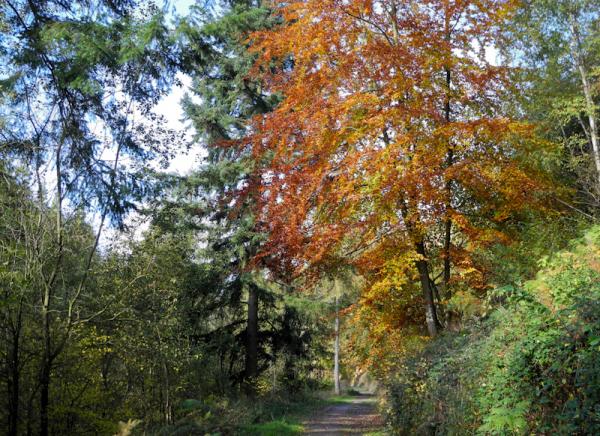 Autumn  Ludlow Shropshire UK