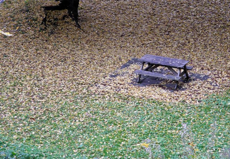 Autumn Teme Ludlow Shropshire UK