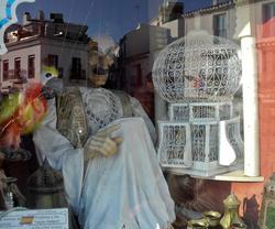 Moor Parrot Frigiliana Axarquia Spain