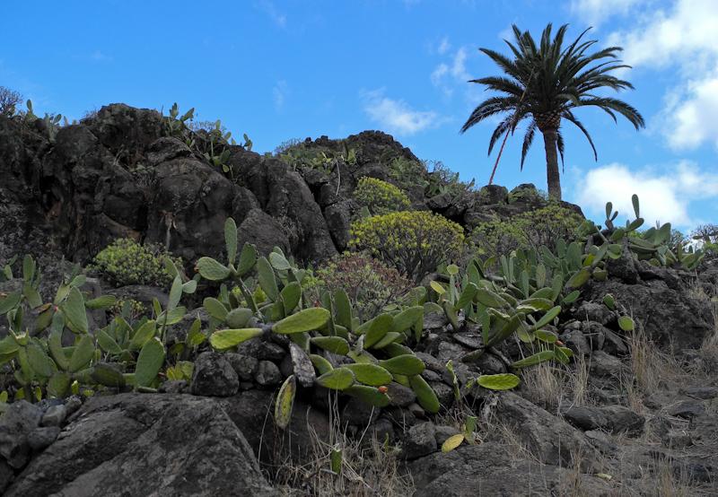 Alajero La Gomera Canary Islands Spain