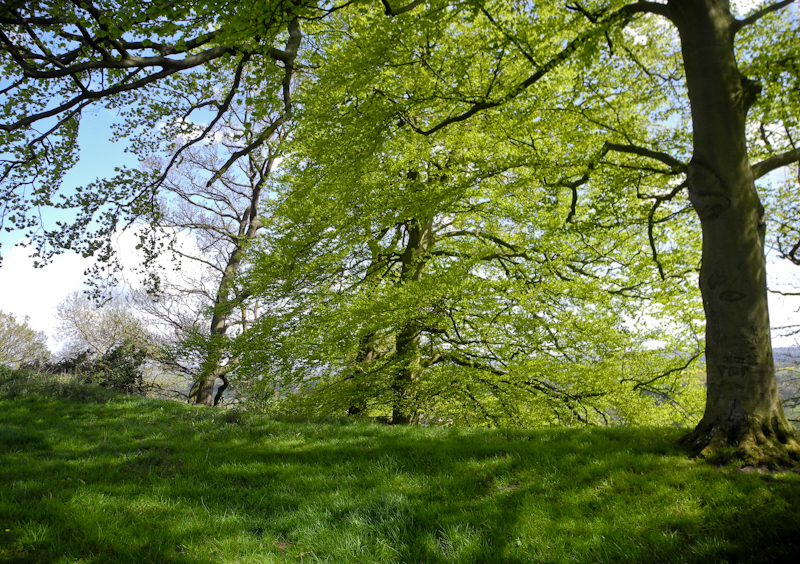 Caynham Camp Ludlow Shropshire UK