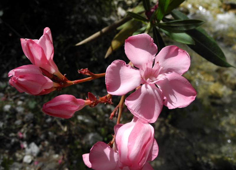OleanderChillar Axaarquia Andalusia Spain