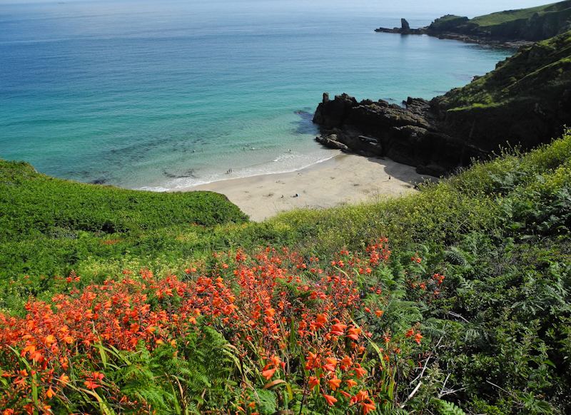 Montbretia Beach Cornwall Coast UK