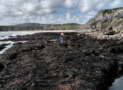 Rock Walk Pobbles Beach Westcliff Gower Wales