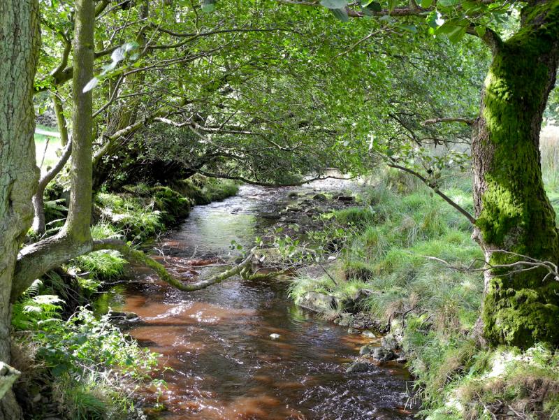 Rosedale Beck North York Moors UK